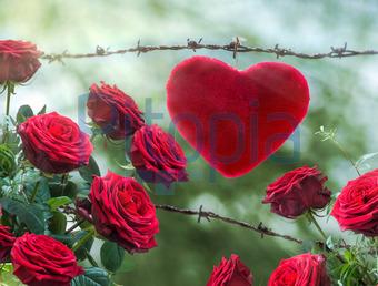 Bildagentur Pitopia - Bilddetails - Liebe kann weh tun (Franz ...