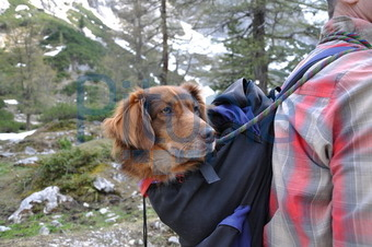 rucksack hund wandern